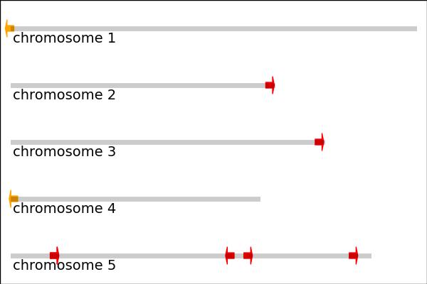 matplotlib绘图实例3:染色体直线示意图